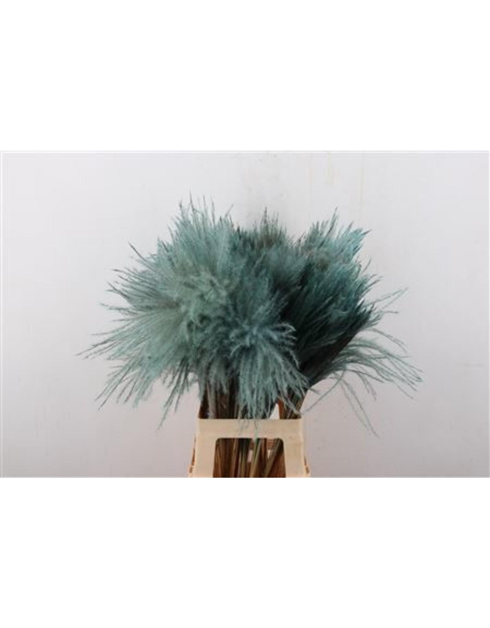 GF Dried Stipa Feather L. Blue P. Stem x 50