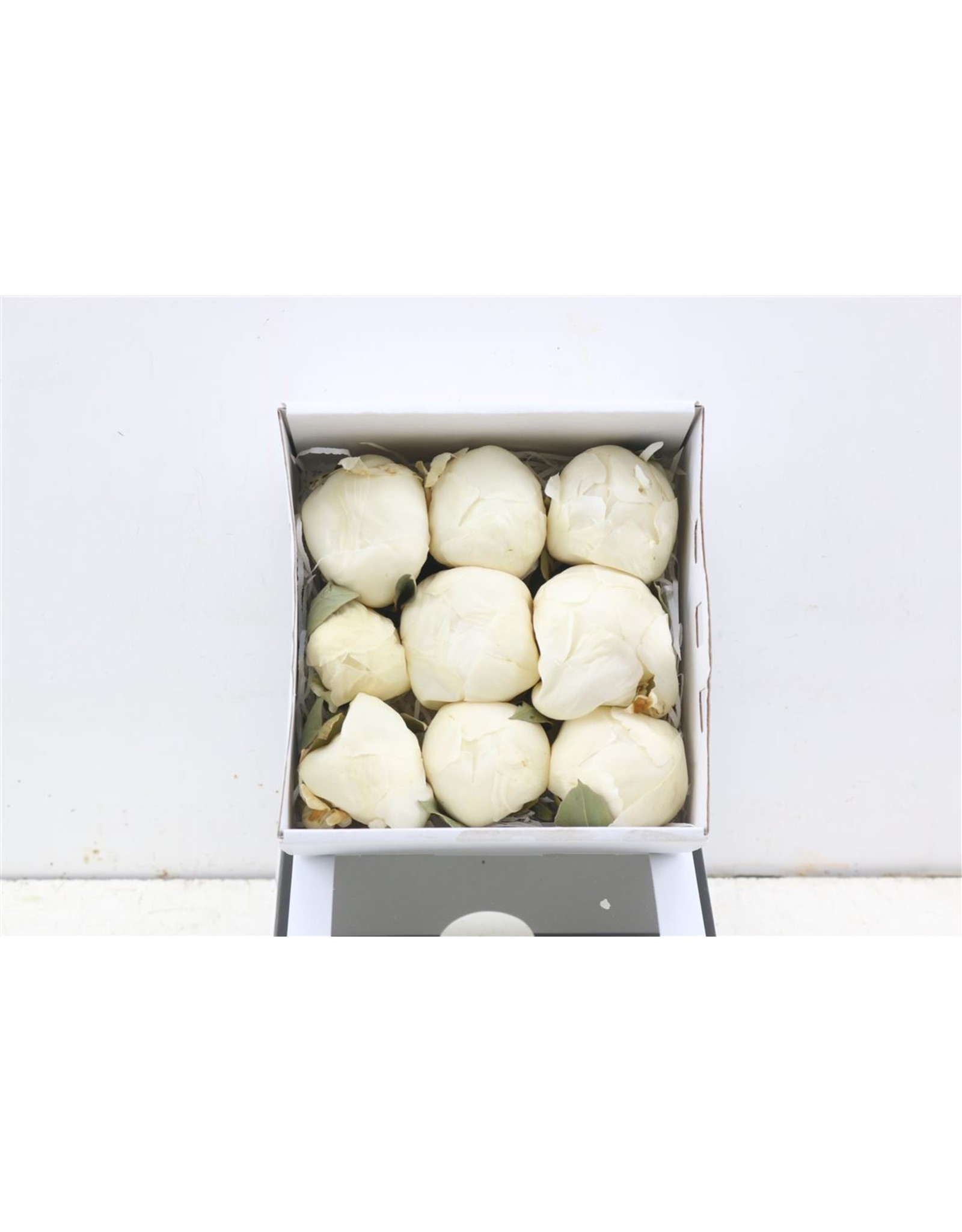 GF Peony Freeze Dried White 9pc Box x 9
