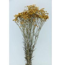 GF Dried Camomilla Yellow Bunch x 3