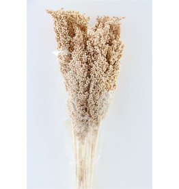 GF Dried Sorghum 6pc Terra Bunch x 2