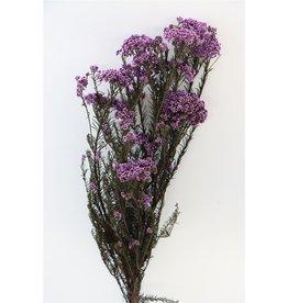 GF Pres Rice Flowers Purple Bunch x 2