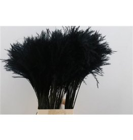 GF Dried Stipa Feather Black P. Stem x 50