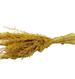 GF Dried Bq Sheaf Alpha Grass Yellow x 2