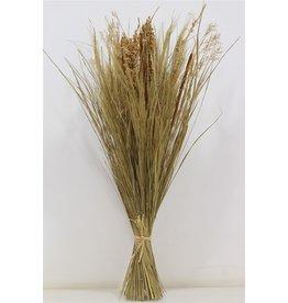 GF Dried Bq Tarai Grass H75 x 12