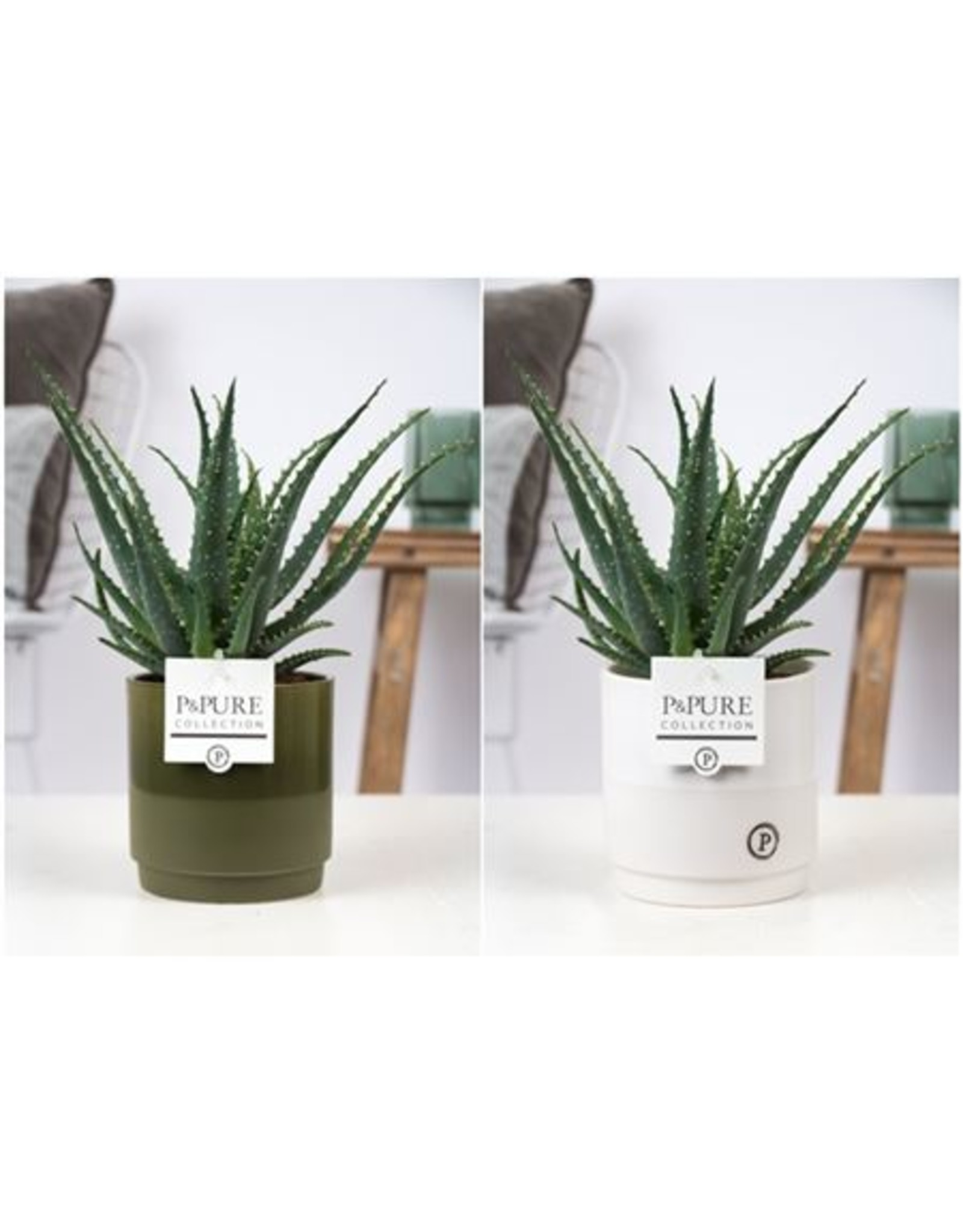 VDP Aloe Arborescens Keramiek Julia x 6