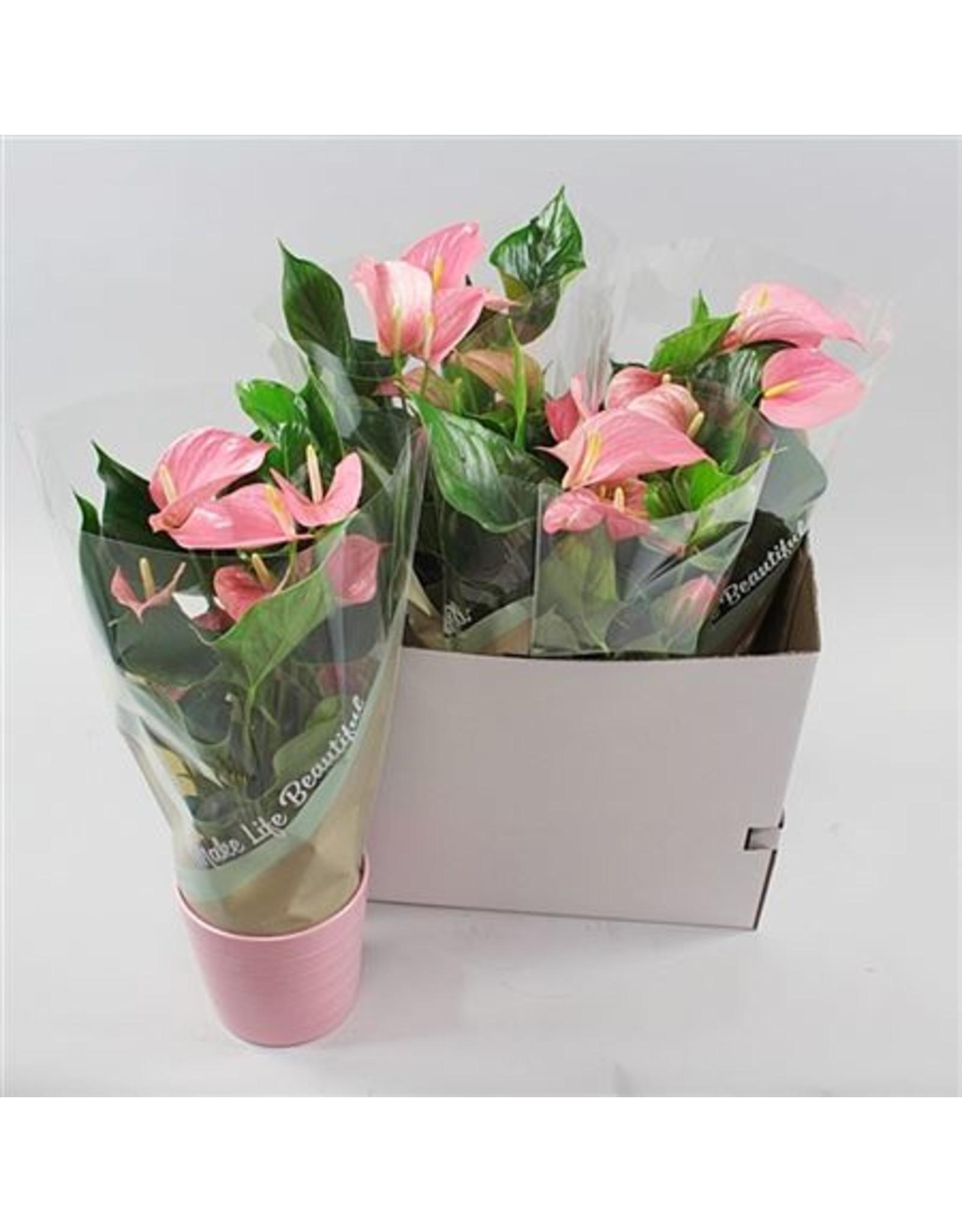 VDP Anth An Pink Explosion Keramiek Riva Rose x 4