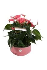 VDP Anth St Table Pink Champion Keramiek Lucca x 2