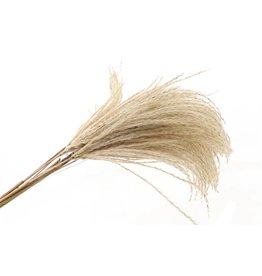 GF Dried Bundle Silver Grass 10pcs Bunch x 10