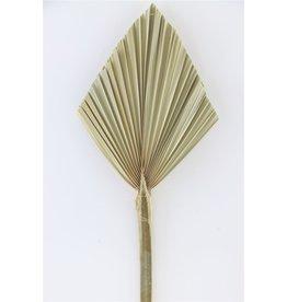 GF Dried Palm Speer Small Naturel Stem x 5