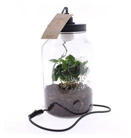 VDP Arr Coffea Arabica Glas Luma Flora + Lamp x 4