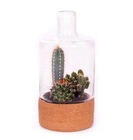 VDP Beplante Glazen Stolp Met Kurk En 3x Cactus 5,5 Cm x 6