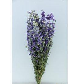 GF Dried Delphinium Lilac Extra Bunch Slv x 1