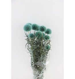 GF Pres Echinops 10pc L. Blue Bunch x 3