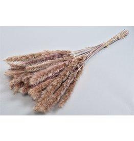 DK Dry Pampas Fluffy 75cm Per 25-30 Stuks x 1