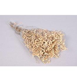 DK Dry Gypsophila Naturel 55 Gram x 1