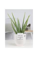 VDP Aloe Vera In Pure Liv x 6