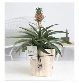 VDP Opm Pc02-700 Ananas Amigo Wood x 6