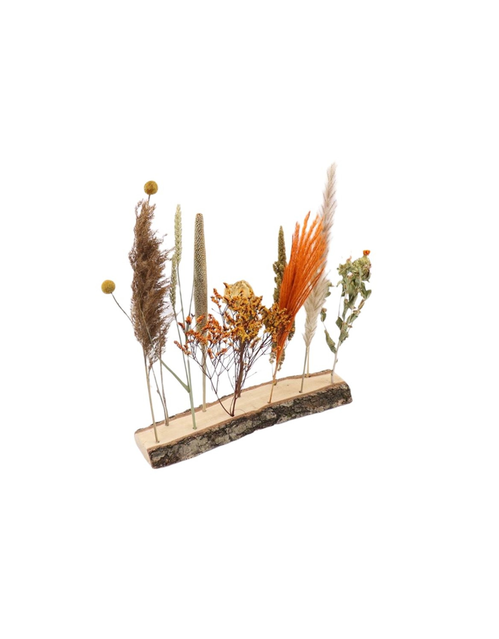 HD Arr. Dried Flowers Fenne W7-11 L40.0h35.0 x 5