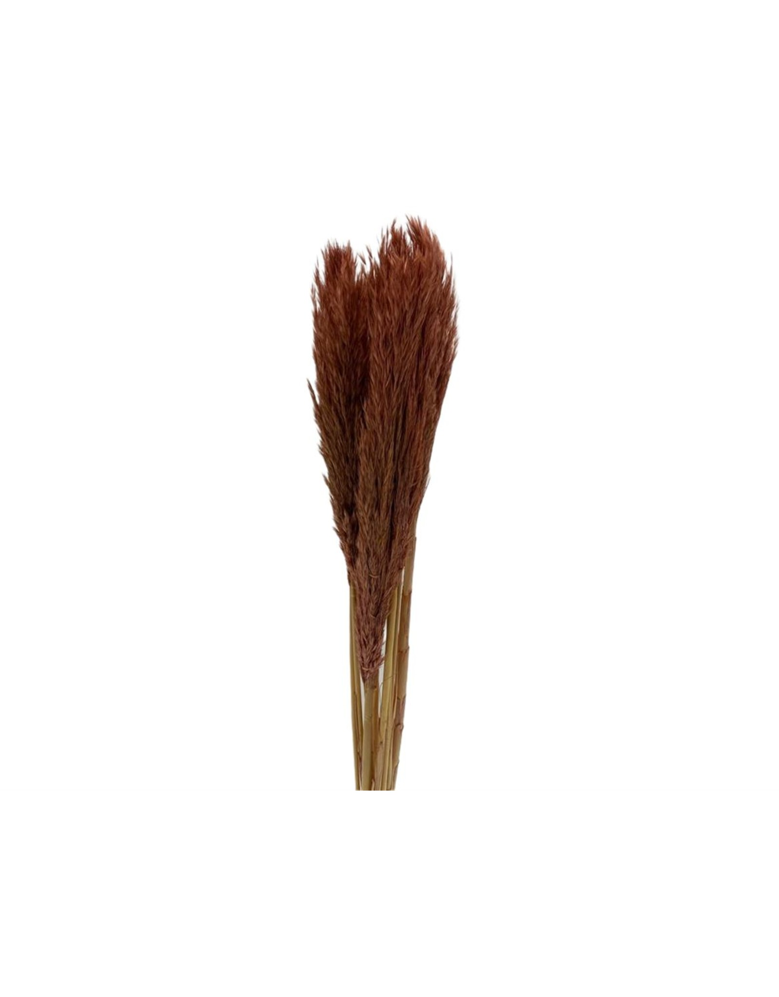 HD bos Nanal Grass 10pc in hoes  ↑75.0 (x 24)