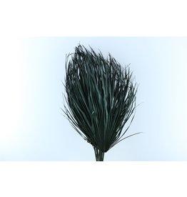 GF Gedroogde Chamaerops (10tk) Zwart Bunch x 2