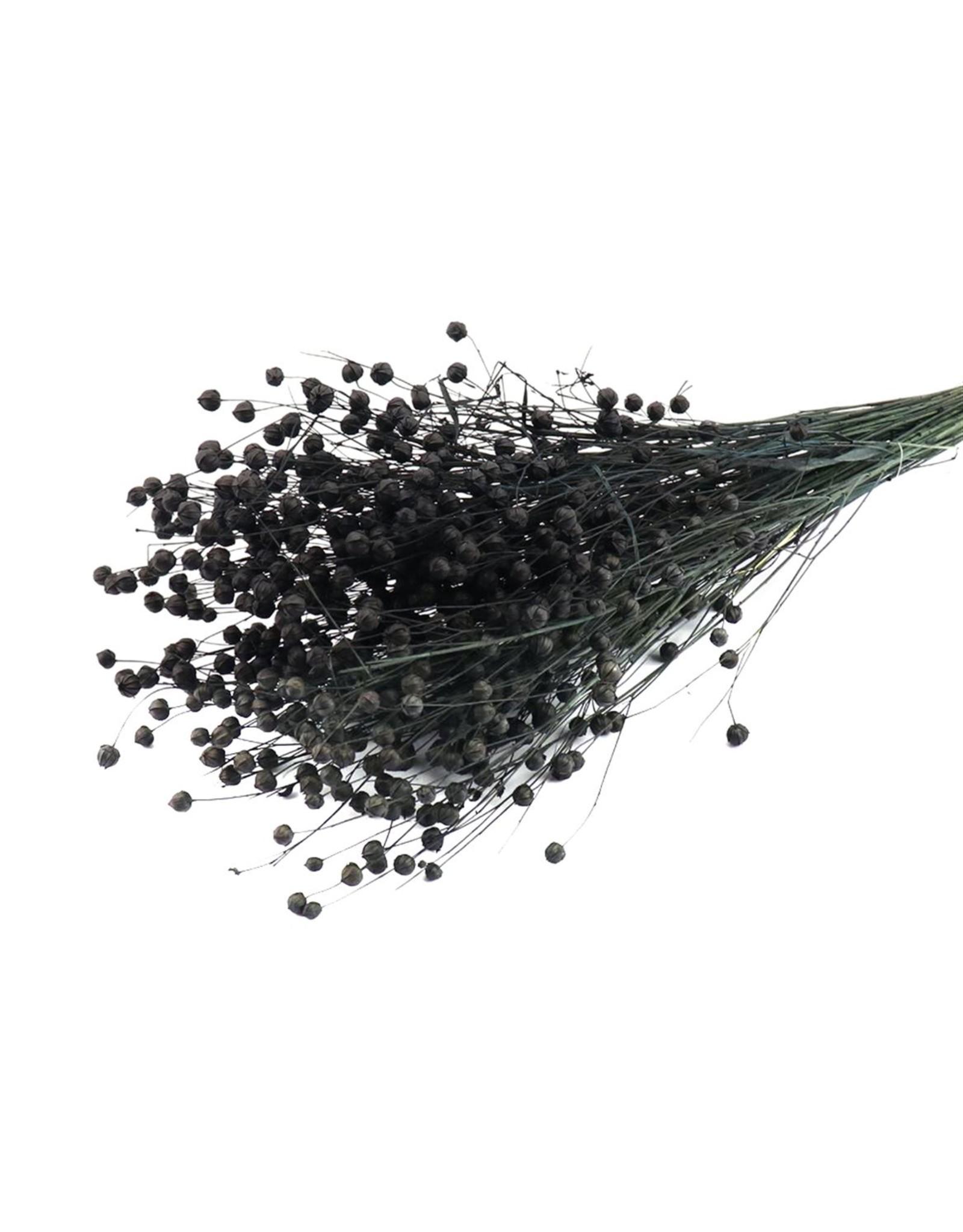 HD Bündel Flax Grass Slv (x 25)