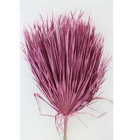 GF Gedroogde Chamaerops (10tk) Frosted Roze Bunch x 2