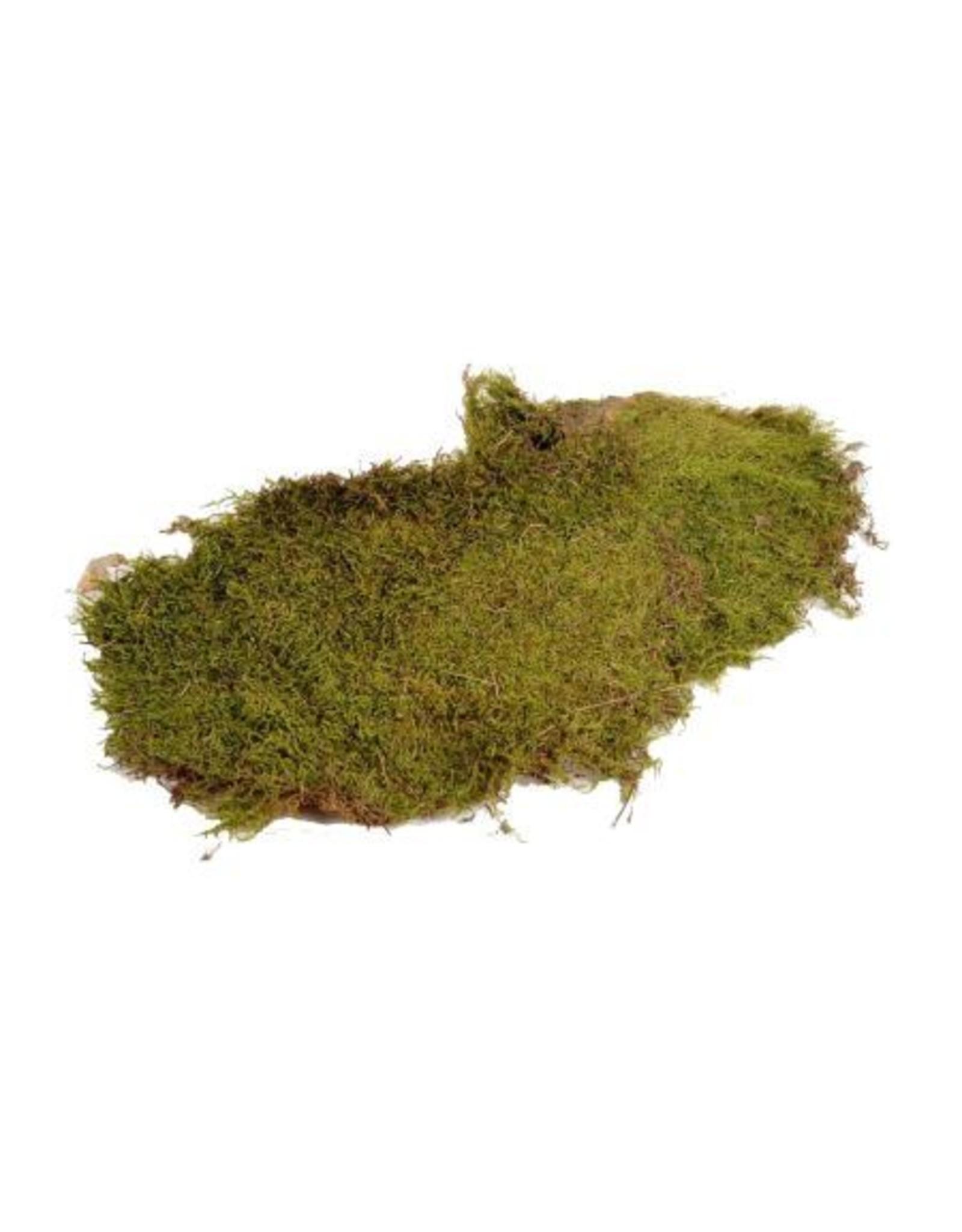 HD Basic Flat Moss ± 600gr pro stück