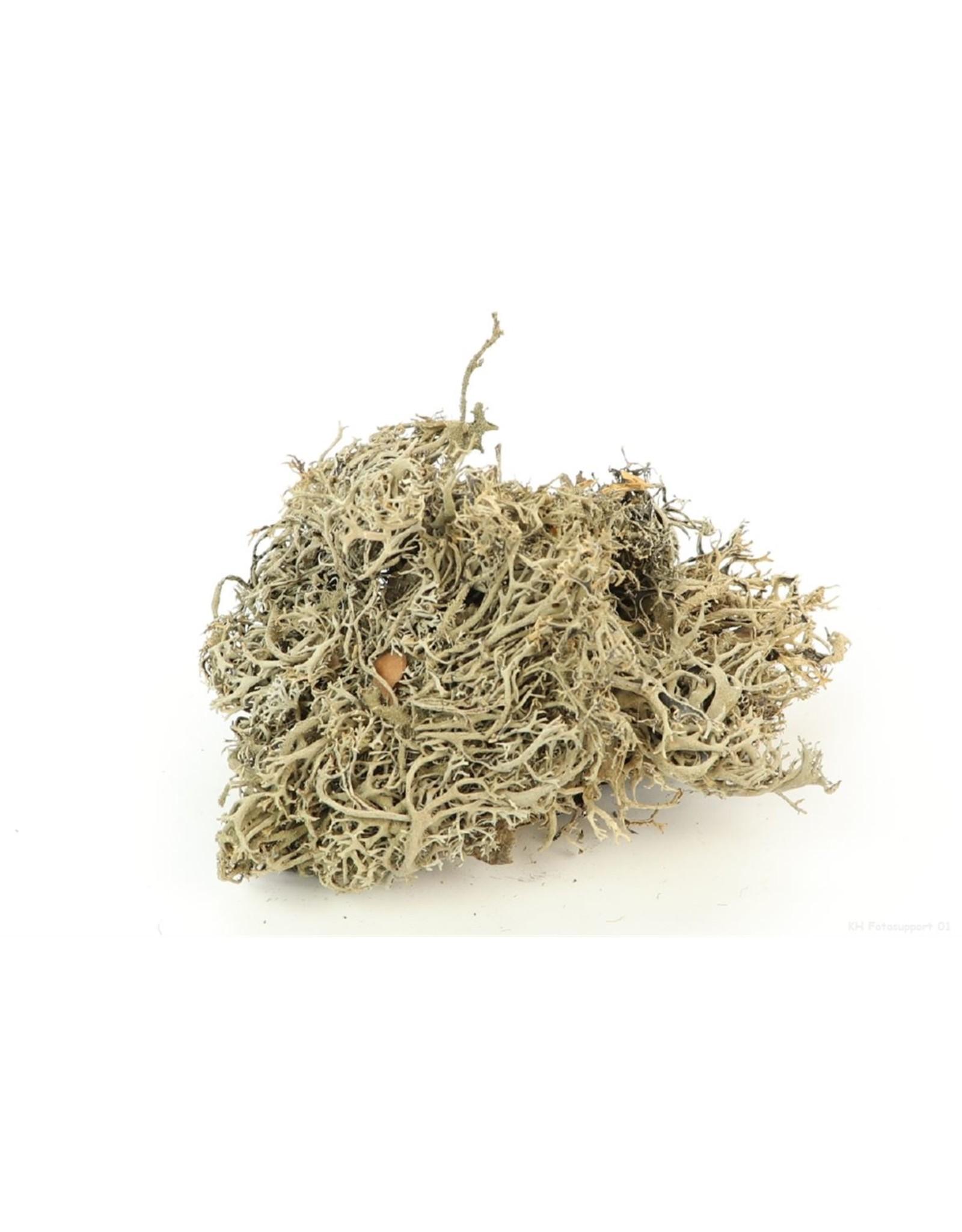 HD Basic Lychen Moss per stuk