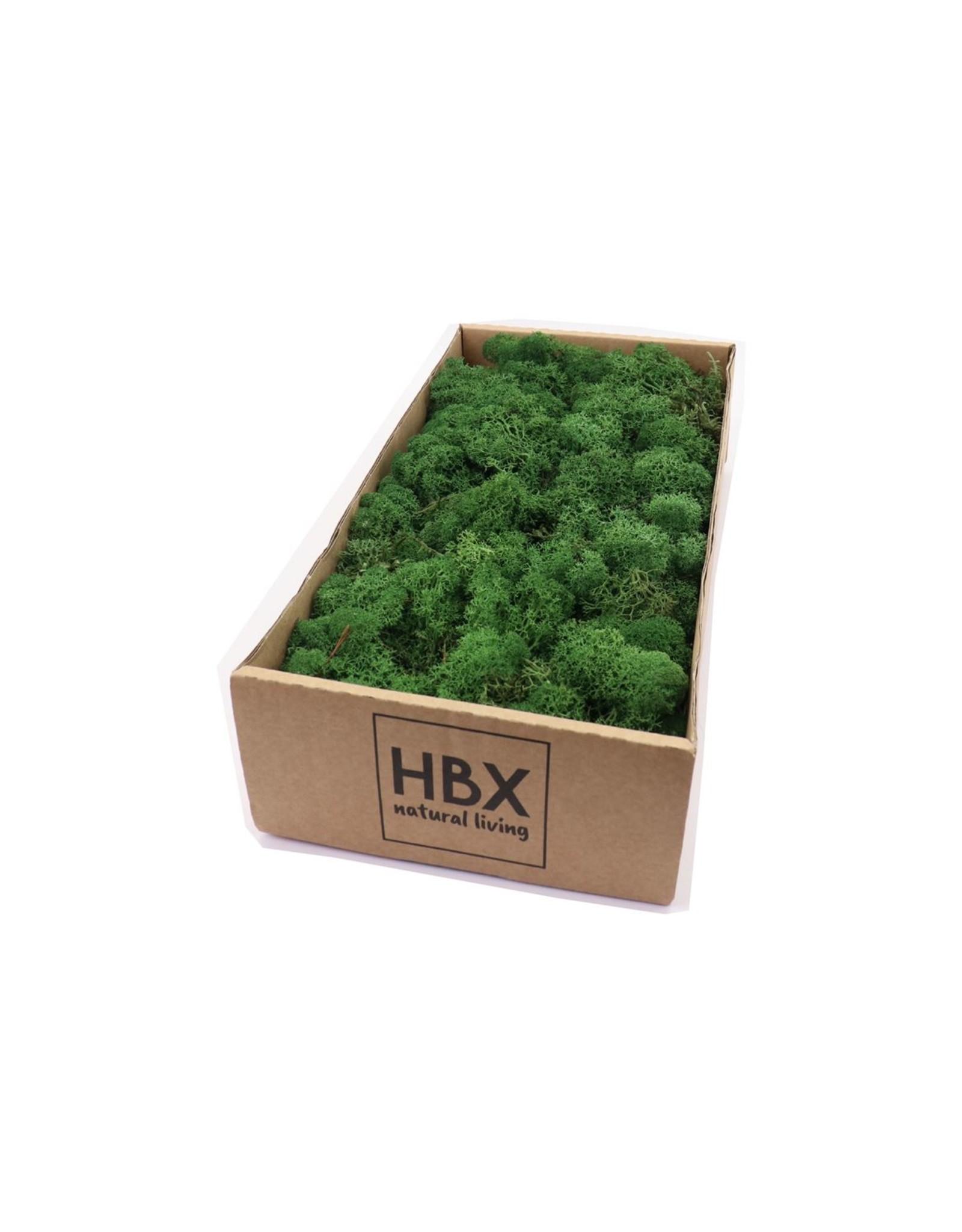 HD Basic Reindeer Moss 500gr (x 6)