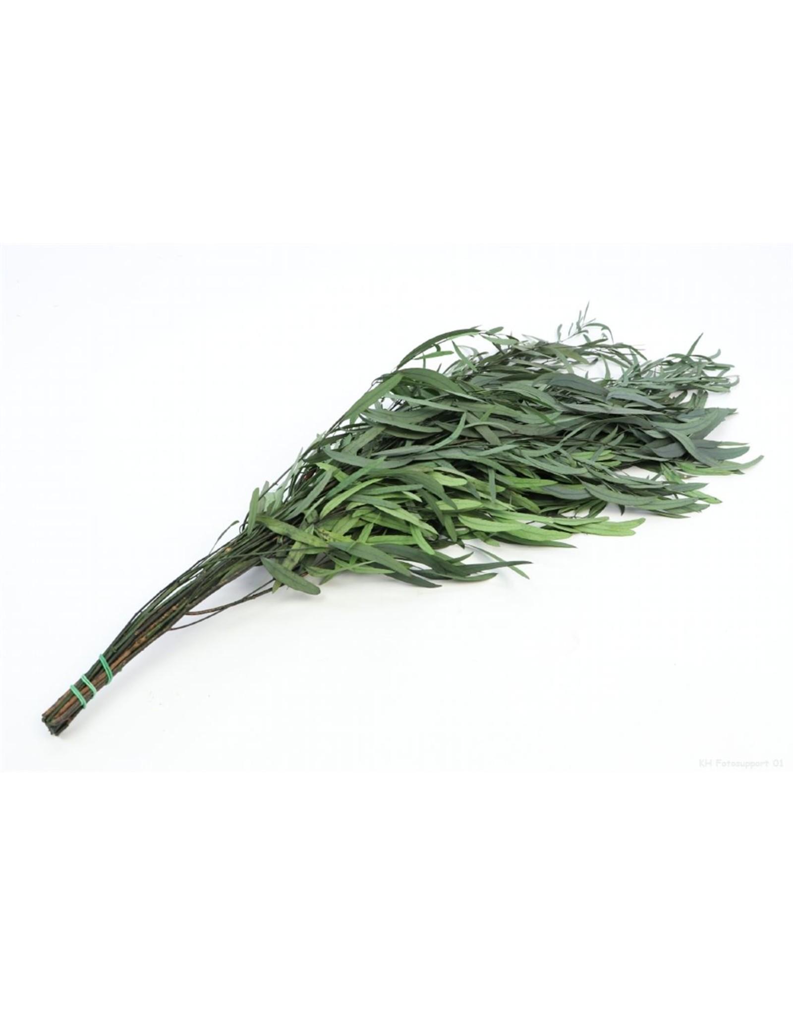 HD Bündel Eucalyptus Nicoly konserviert.150gr (x 20)