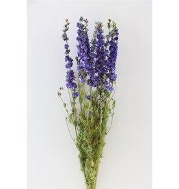 GF Trockenblumen Delphinium Lavender Extra Bündel (x 2)