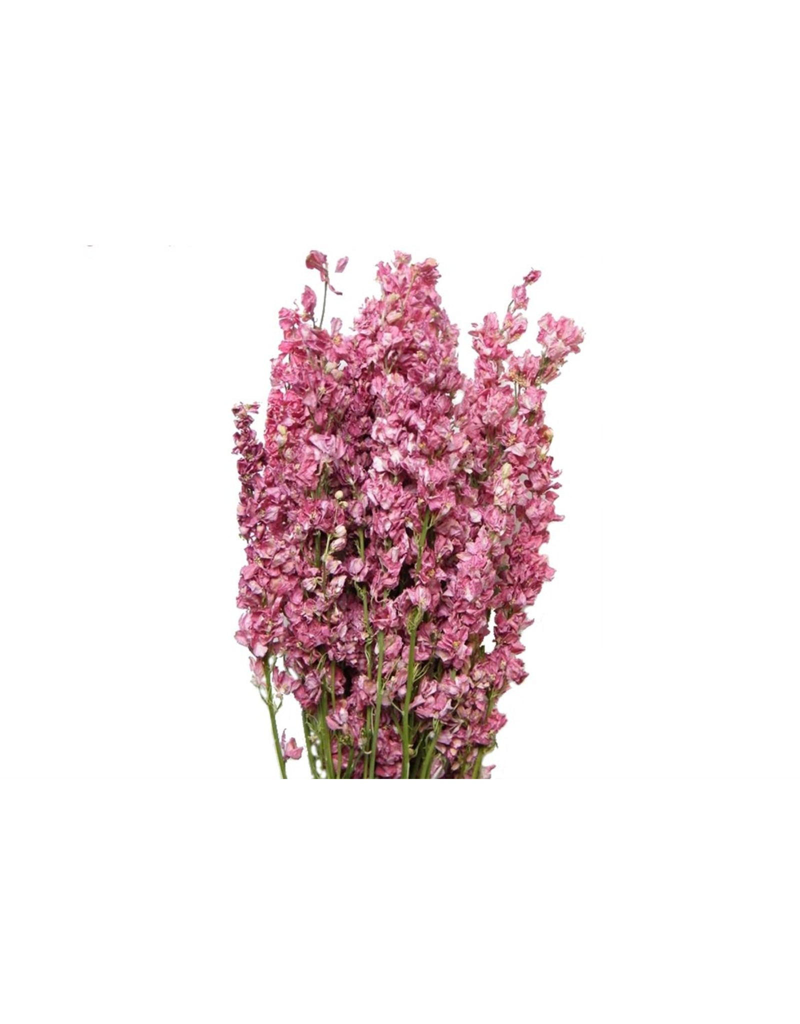 HD bos Delphinium roze in hoes (x 20)