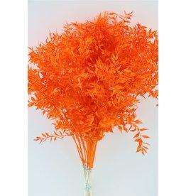 GF Gedroogde Ruscus Oranje P Stem x 25