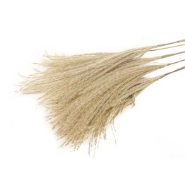 HD Bos Fluffy Zilver Grass 10Pc in hoes  ↑75.0 (X 25)