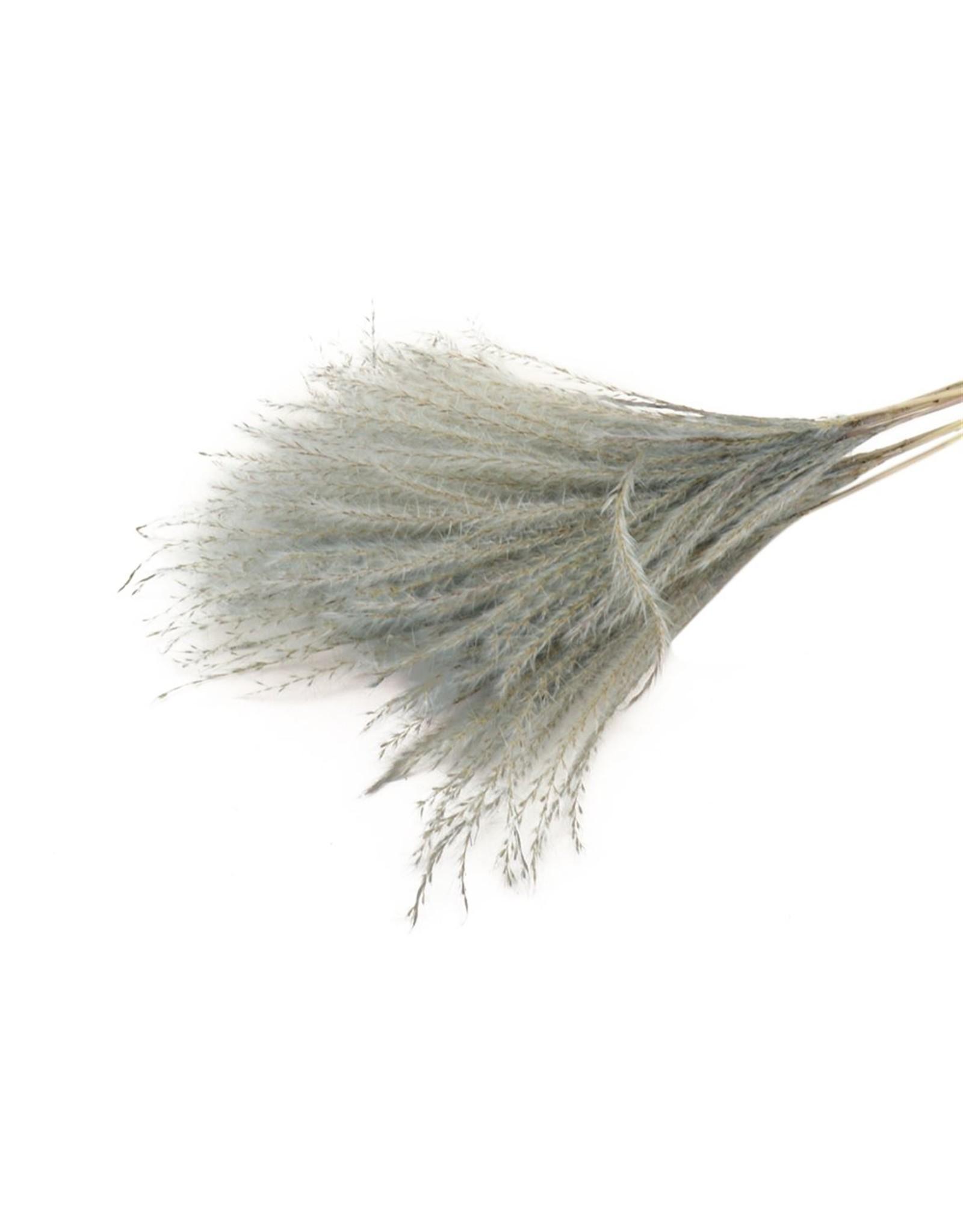HD Bündel Fluffy Silver Grass 10pc Slv  ↑75.0 (x 25)