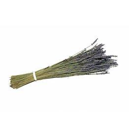 GF Getrockneter Lavendel Super blau 100gr Bündel (x 5)