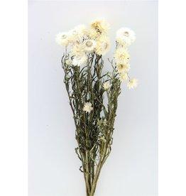 GF Gedroogde Helichrysum Wit Bos (X 4)