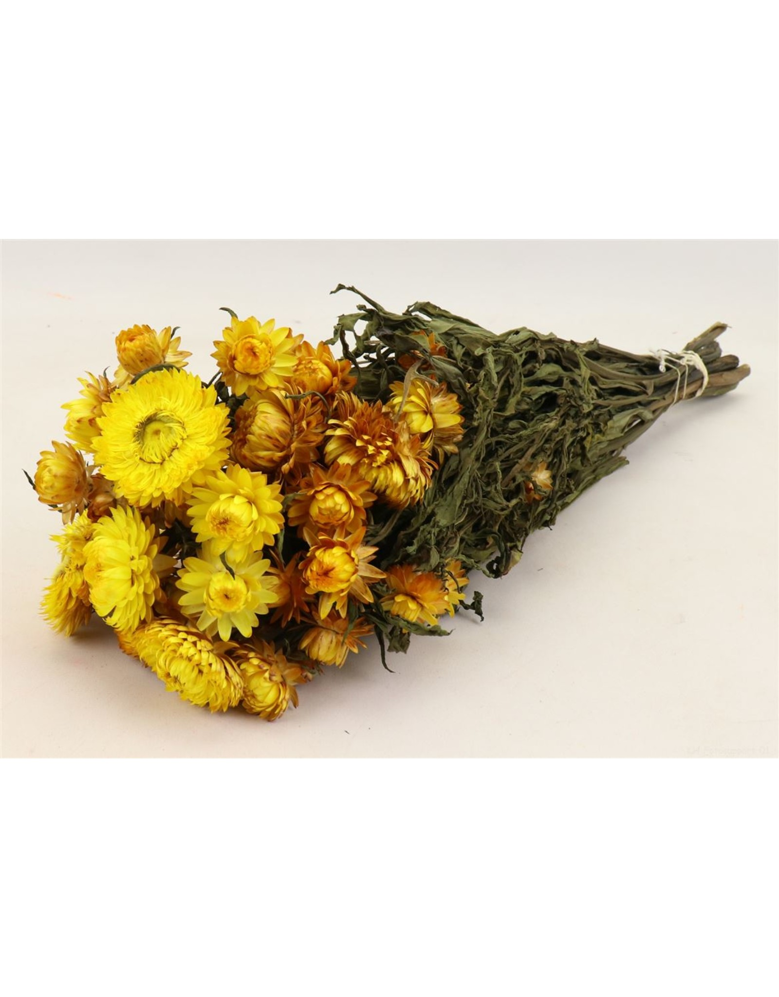 HD bos Helichrysum geel in hoes (x 20)