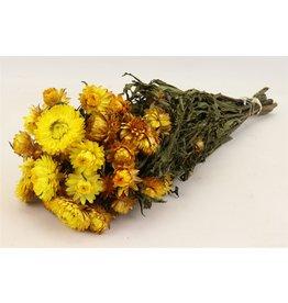 HD Bunch Helichrysum Yellow Slv x 20