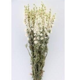 GF Getrockneter Delphinium Weißer Bund (x 5)