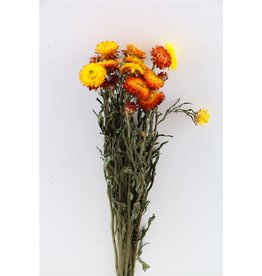 GF Gedroogde Helichrysum Oranje Bunch x 5