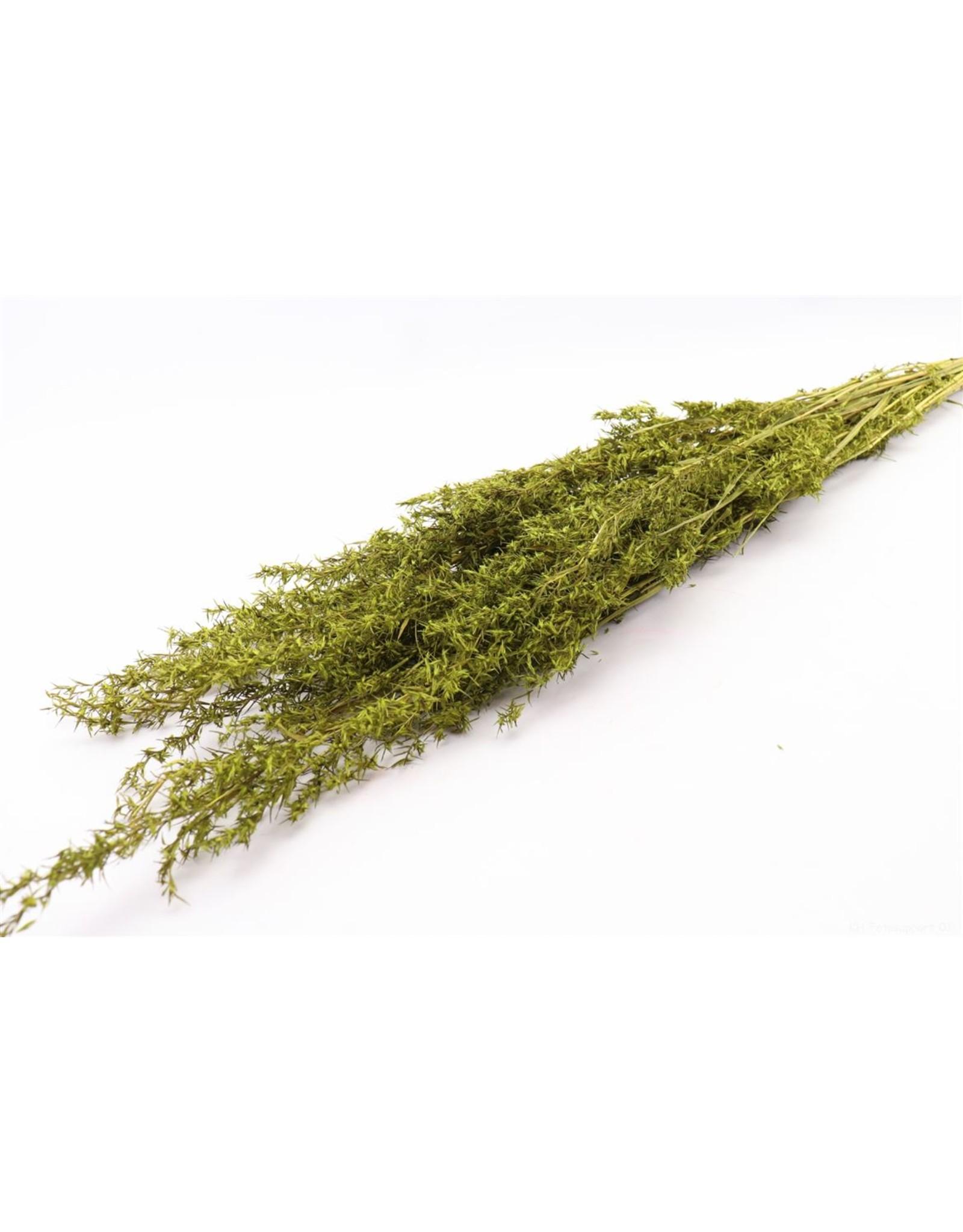 HD Bündel Beta Grass Slv 100gr  ↑100.0 (x 24)