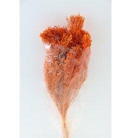 GF Gedroogde Broom Bloom Oranje Bos (X 3)