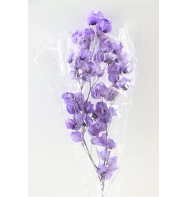 GF Gedroogde Bougainvillea 55Cm Lavender Bos (X 5)