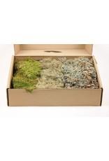 HD Basic Moss Mix ± 650gr x 1
