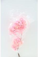 GF Dried Bougainvillea 55cm Baby Pink Bunch**1kolli M x 5