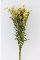 GF Dried Solidago Natural Bunch x 5