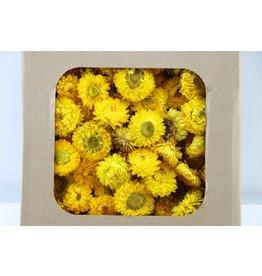 GF Gedroogde Helichrysum Heads Geel Box Per Stuk