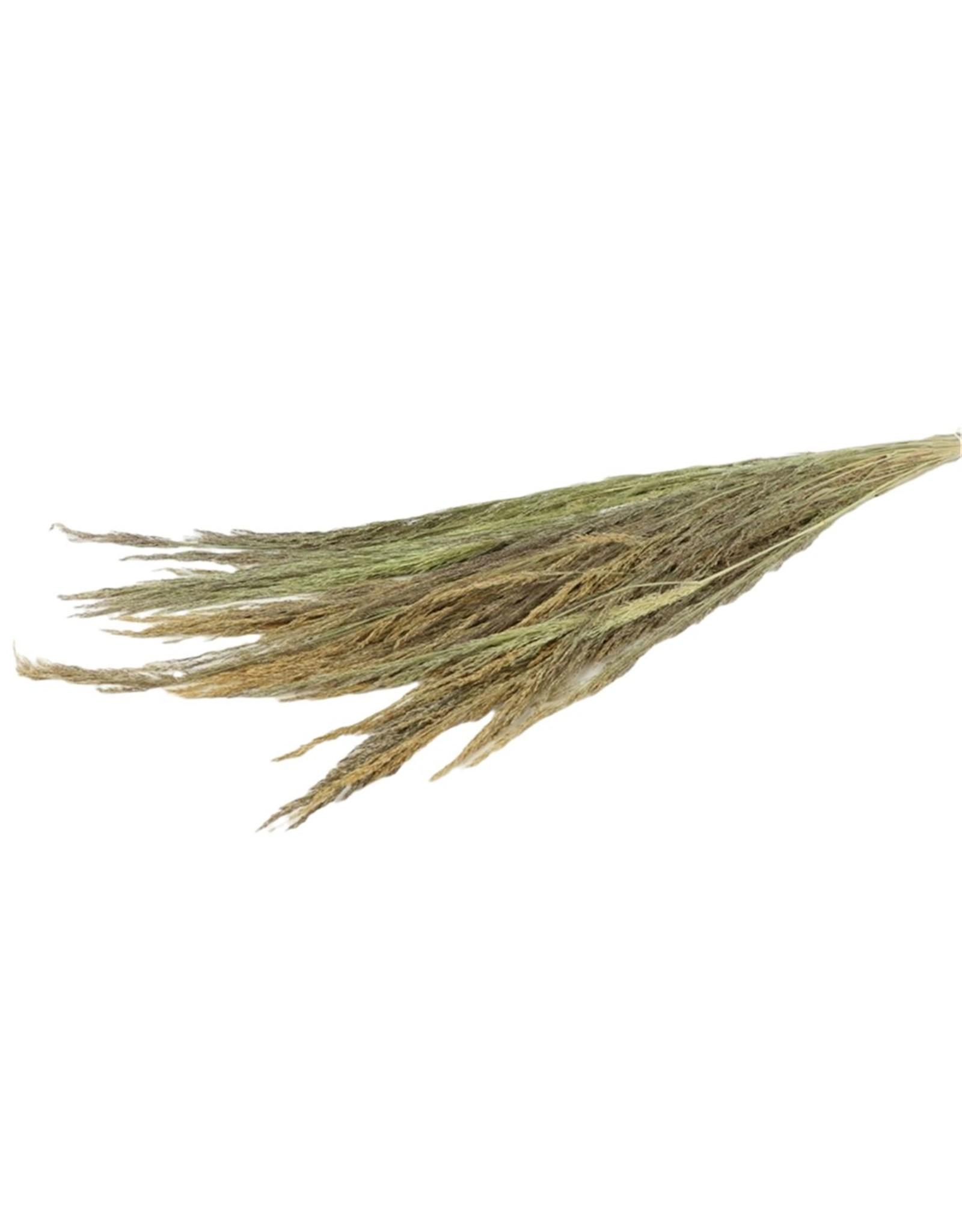 HD Bündel Erba Grass 250gr Slv (x 40)