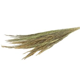 HD Bos Erba Grass 250Gr in hoes (X 40)